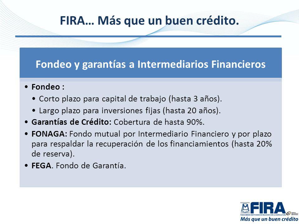 FIRA… Más que un buen crédito. Fondeo y garantías a Intermediarios Financieros Fondeo : Corto plazo para capital de trabajo (hasta 3 años). Largo plaz