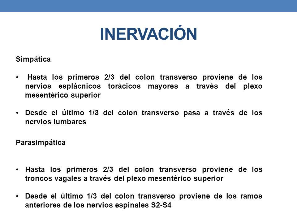 INERVACIÓN Simpática Hasta los primeros 2/3 del colon transverso proviene de los nervios esplácnicos torácicos mayores a través del plexo mesentérico