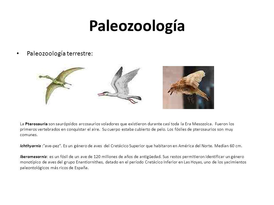 Paleozoología Paleozoología terrestre: La Pterosauria son saurópsidos arcosaurios voladores que existieron durante casi toda la Era Mesozoica. Fueron