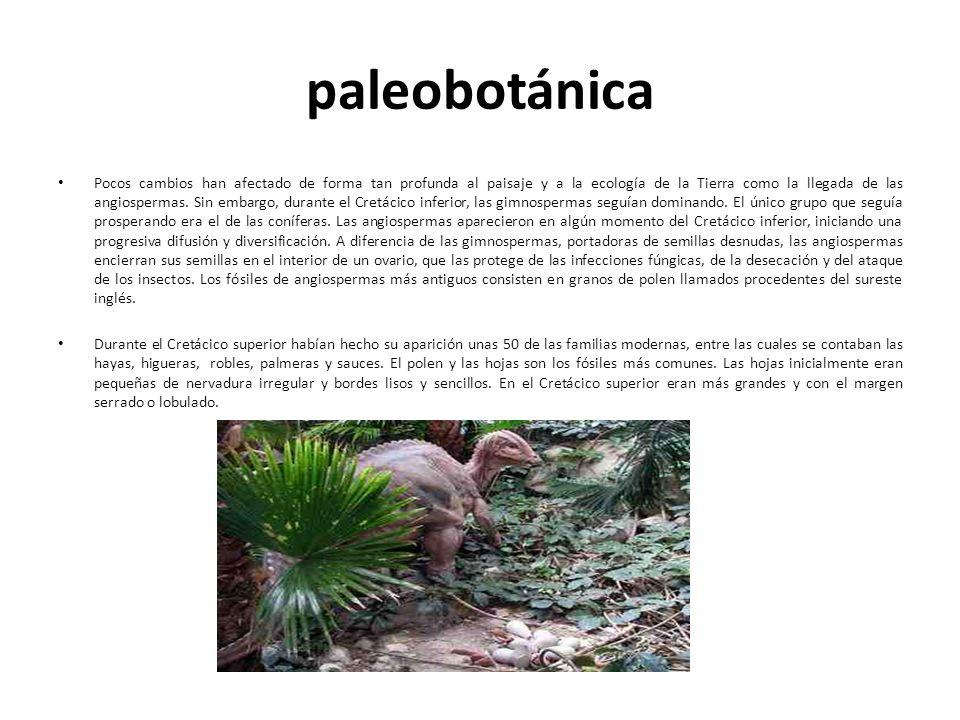 paleobotánica Pocos cambios han afectado de forma tan profunda al paisaje y a la ecología de la Tierra como la llegada de las angiospermas. Sin embarg