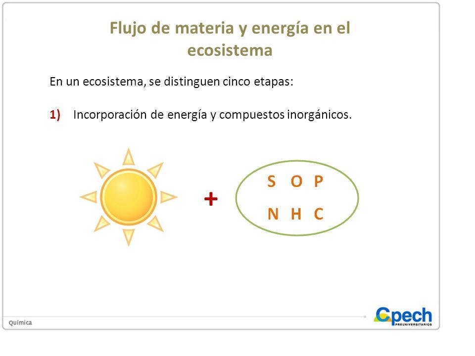 Flujo de materia y energía en el ecosistema En un ecosistema, se distinguen cinco etapas: 1)Incorporación de energía y compuestos inorgánicos. 1)Creac