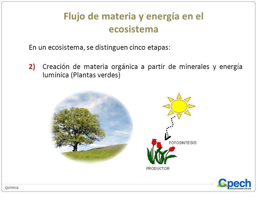 Flujo de materia y energía en el ecosistema En un ecosistema, se distinguen cinco etapas: 2)Creación de materia orgánica a partir de minerales y energ