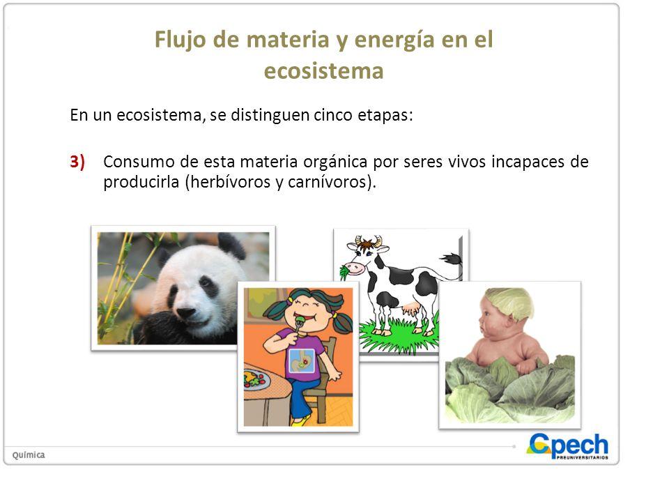 Flujo de materia y energía en el ecosistema En un ecosistema, se distinguen cinco etapas: 3)Consumo de esta materia orgánica por seres vivos incapaces
