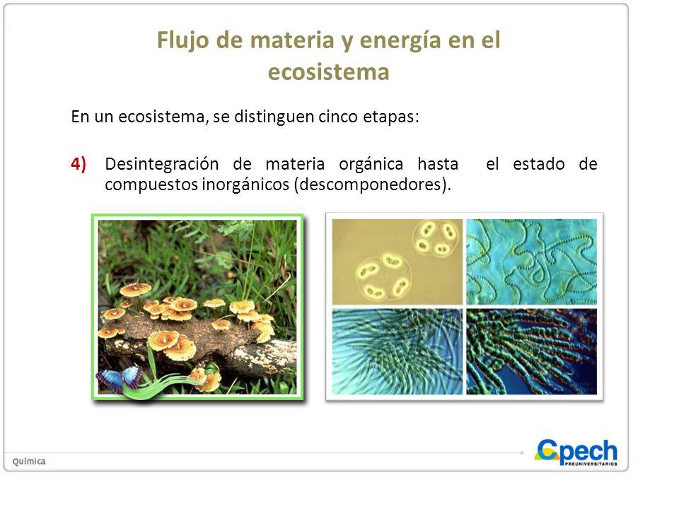 Flujo de materia y energía en el ecosistema En un ecosistema, se distinguen cinco etapas: 4)Desintegración de materia orgánica hasta el estado de comp