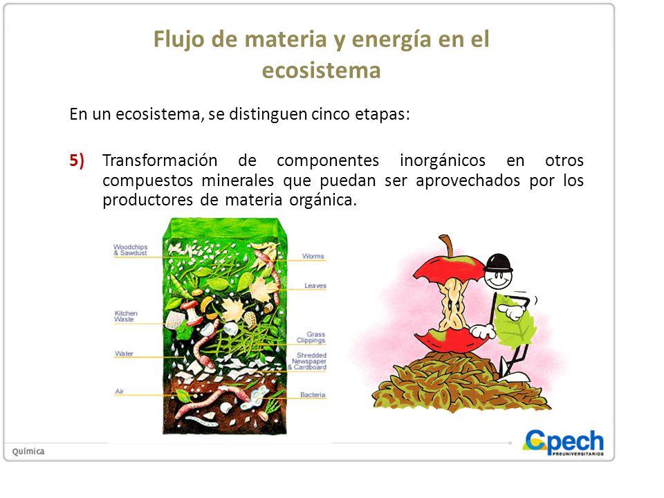 Flujo de materia y energía en el ecosistema En un ecosistema, se distinguen cinco etapas: 5)Transformación de componentes inorgánicos en otros compues