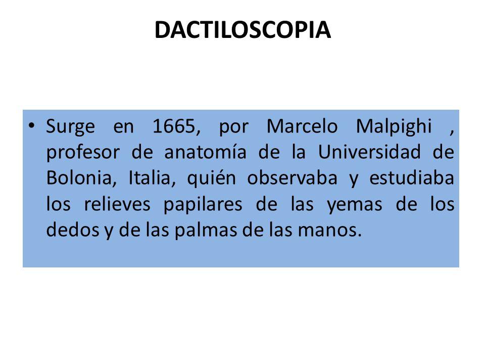 DACTILOSCOPIA Surge en 1665, por Marcelo Malpighi, profesor de anatomía de la Universidad de Bolonia, Italia, quién observaba y estudiaba los relieves