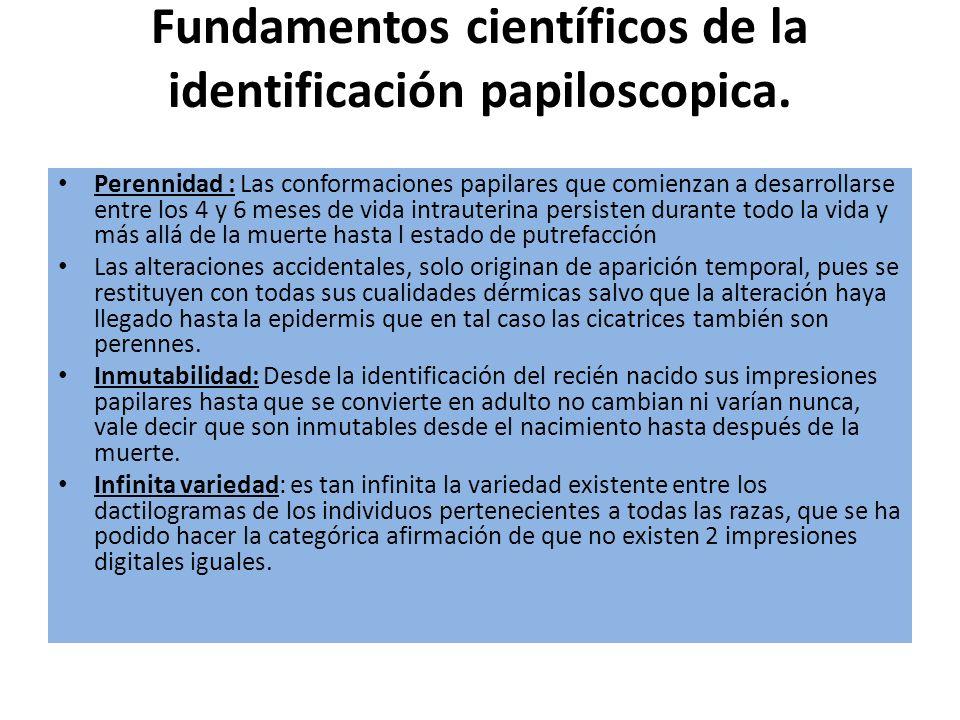 Fundamentos científicos de la identificación papiloscopica. Perennidad : Las conformaciones papilares que comienzan a desarrollarse entre los 4 y 6 me