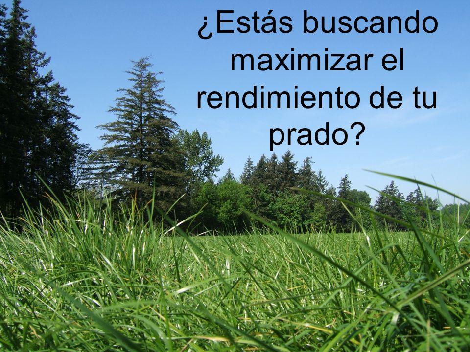 ¿Estás buscando maximizar el rendimiento de tu prado?
