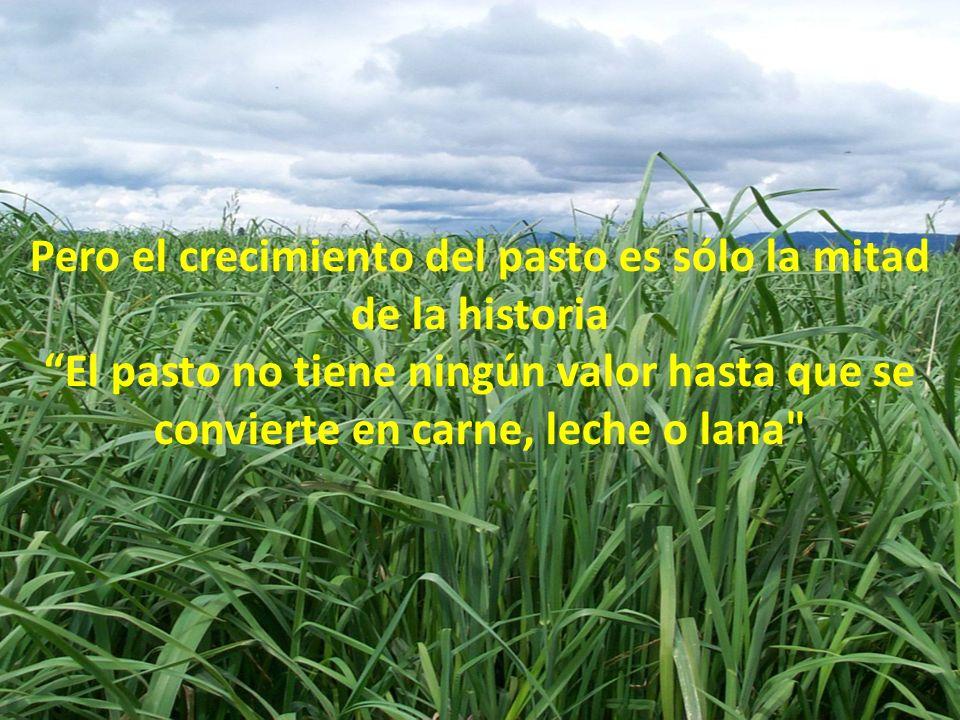 Pero el crecimiento del pasto es sólo la mitad de la historia El pasto no tiene ningún valor hasta que se convierte en carne, leche o lana