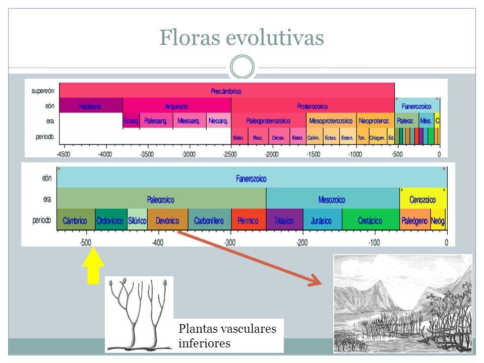 Floras evolutivas Plantas vasculares inferiores