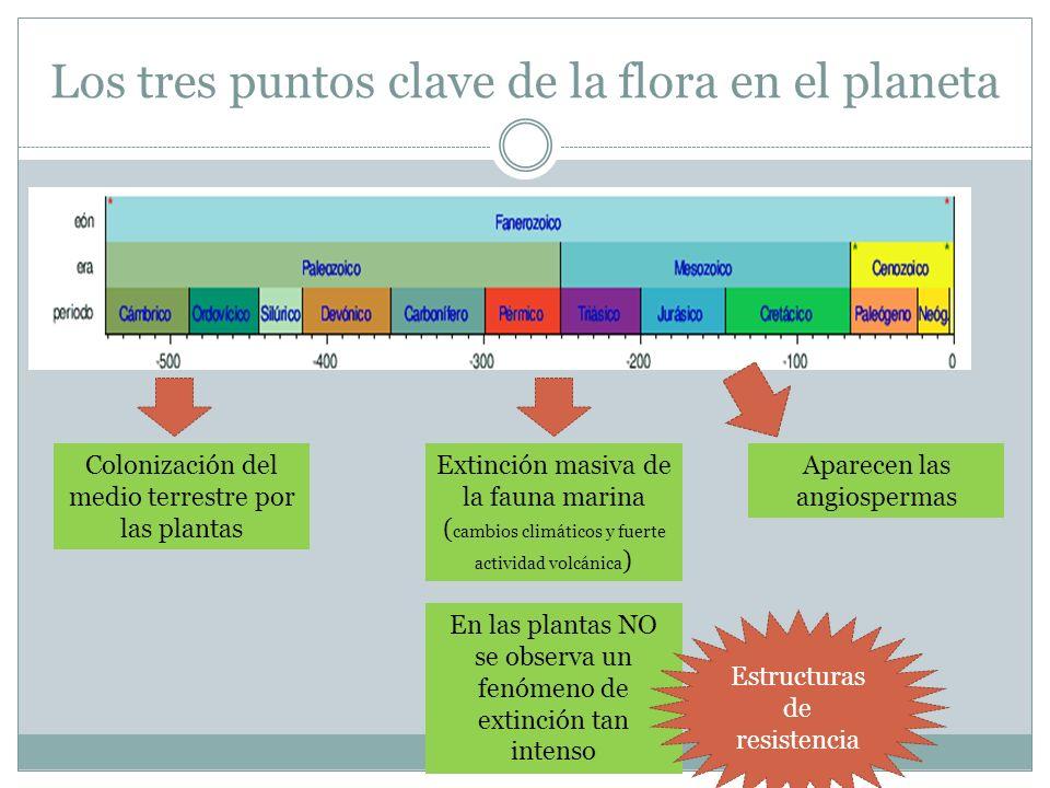 Los tres puntos clave de la flora en el planeta Colonización del medio terrestre por las plantas Extinción masiva de la fauna marina ( cambios climáti