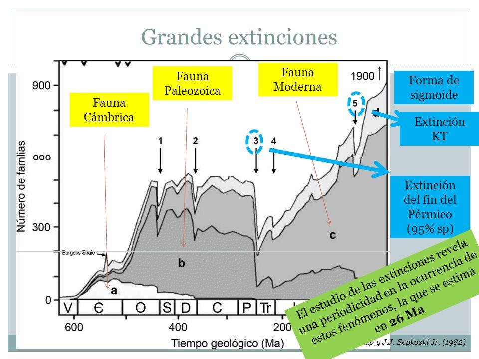 Grandes extinciones Papel de las extinciones en la evolución biológica Raup y J.J. Sepkoski Jr. (1982) Fauna Cámbrica Fauna Paleozoica Fauna Moderna F