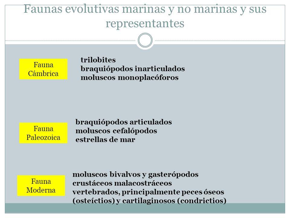 Faunas evolutivas marinas y no marinas y sus representantes Fauna Cámbrica Fauna Paleozoica Fauna Moderna trilobites braquiópodos inarticulados molusc