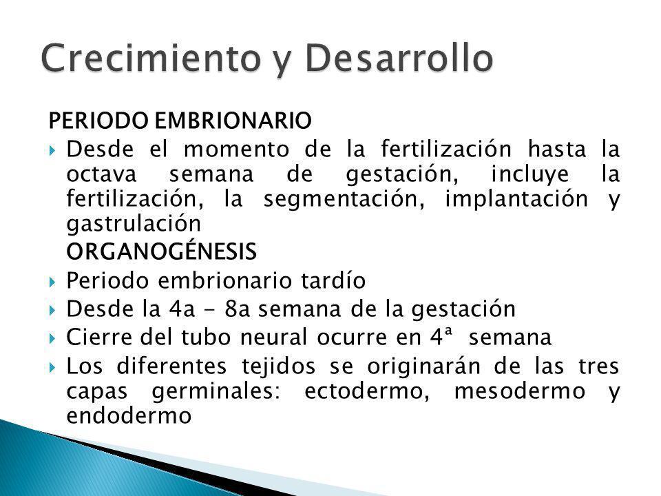PERIODO EMBRIONARIO Desde el momento de la fertilización hasta la octava semana de gestación, incluye la fertilización, la segmentación, implantación