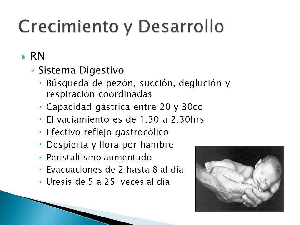 RN Sistema Digestivo Búsqueda de pezón, succión, deglución y respiración coordinadas Capacidad gástrica entre 20 y 30cc El vaciamiento es de 1:30 a 2:
