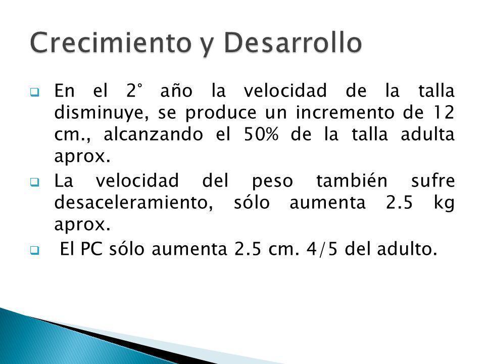 En el 2° año la velocidad de la talla disminuye, se produce un incremento de 12 cm., alcanzando el 50% de la talla adulta aprox. La velocidad del peso