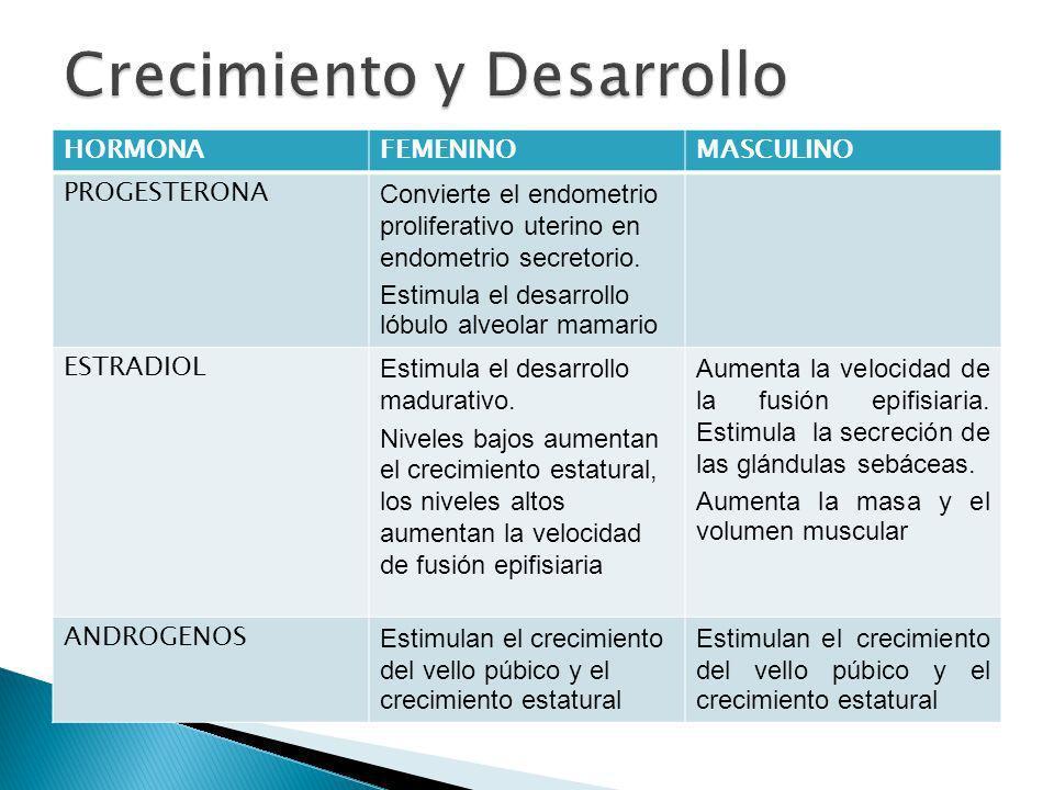 HORMONAFEMENINOMASCULINO PROGESTERONA Convierte el endometrio proliferativo uterino en endometrio secretorio. Estimula el desarrollo lóbulo alveolar m