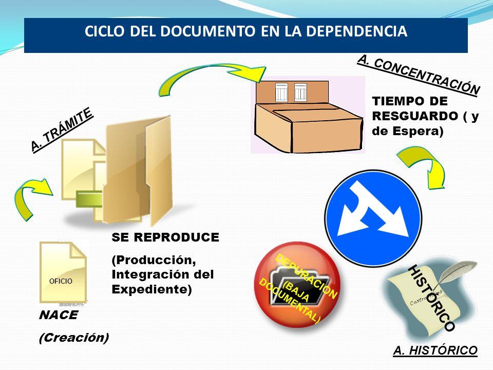 CICLO DEL DOCUMENTO EN LA DEPENDENCIA DEPURACION (BAJA DOCUMENTAL) HISTÓRICO NACE (Creación) SE REPRODUCE (Producción, Integración del Expediente) OFI
