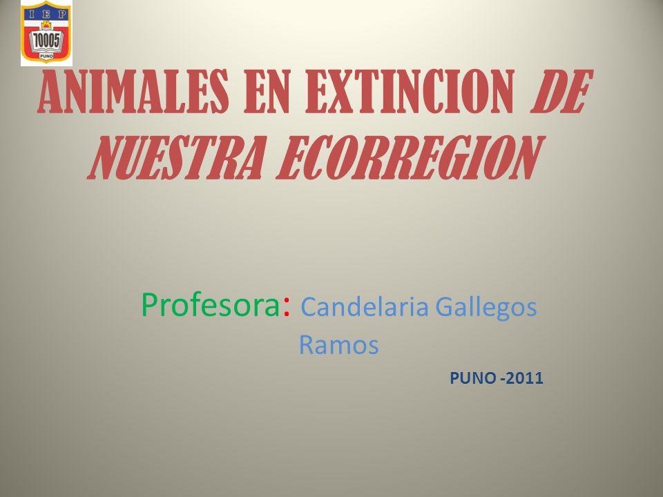 ANIMALES EN EXTINCION DE NUESTRA ECORREGION Profesora : Candelaria Gallegos Ramos PUNO -2011