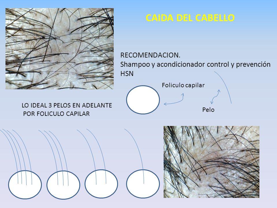 LO IDEAL 3 PELOS EN ADELANTE POR FOLICULO CAPILAR CAIDA DEL CABELLO RECOMENDACION. Shampoo y acondicionador control y prevención HSN Foliculo capilar