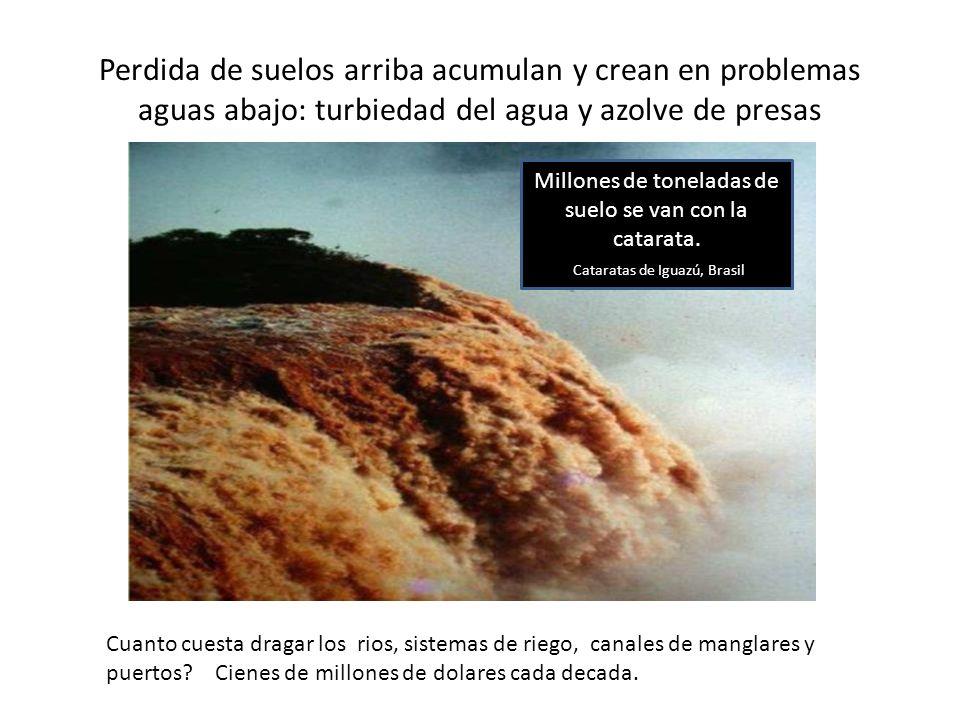 Perdida de suelos arriba acumulan y crean en problemas aguas abajo: turbiedad del agua y azolve de presas Millones de toneladas de suelo se van con la