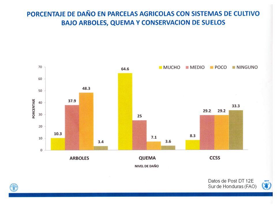 Datos de Post DT 12E Sur de Honduras (FAO)