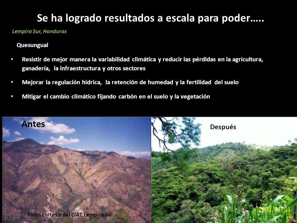 Se ha logrado resultados a escala para poder….. Lempira Sur, Honduras Quesungual Resistir de mejor manera la variabilidad climática y reducir las pérd