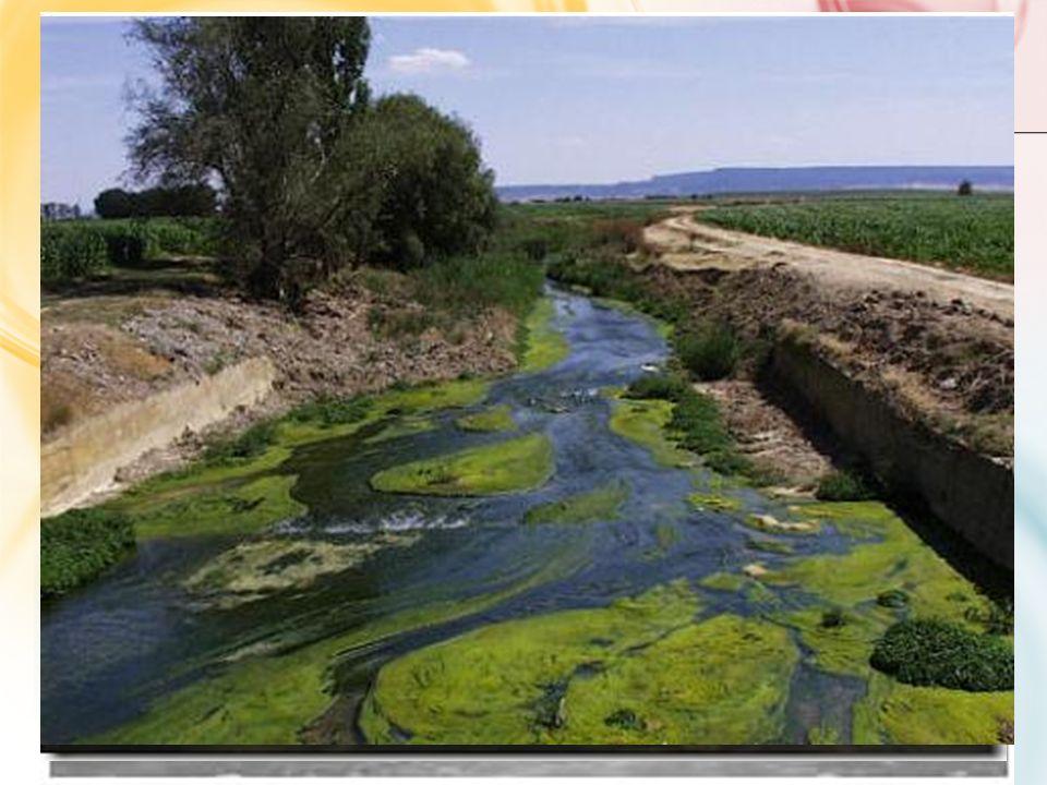 PLANTEAMIENTO DEL PROBLEMA El incremento masivo de las distintas actividades humanas representa hoy en día la fuente de contaminación de los causes na