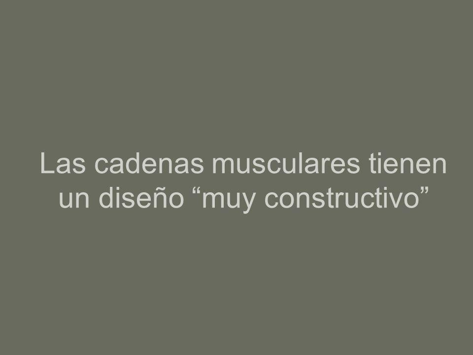 Las cadenas musculares tienen un diseño muy constructivo