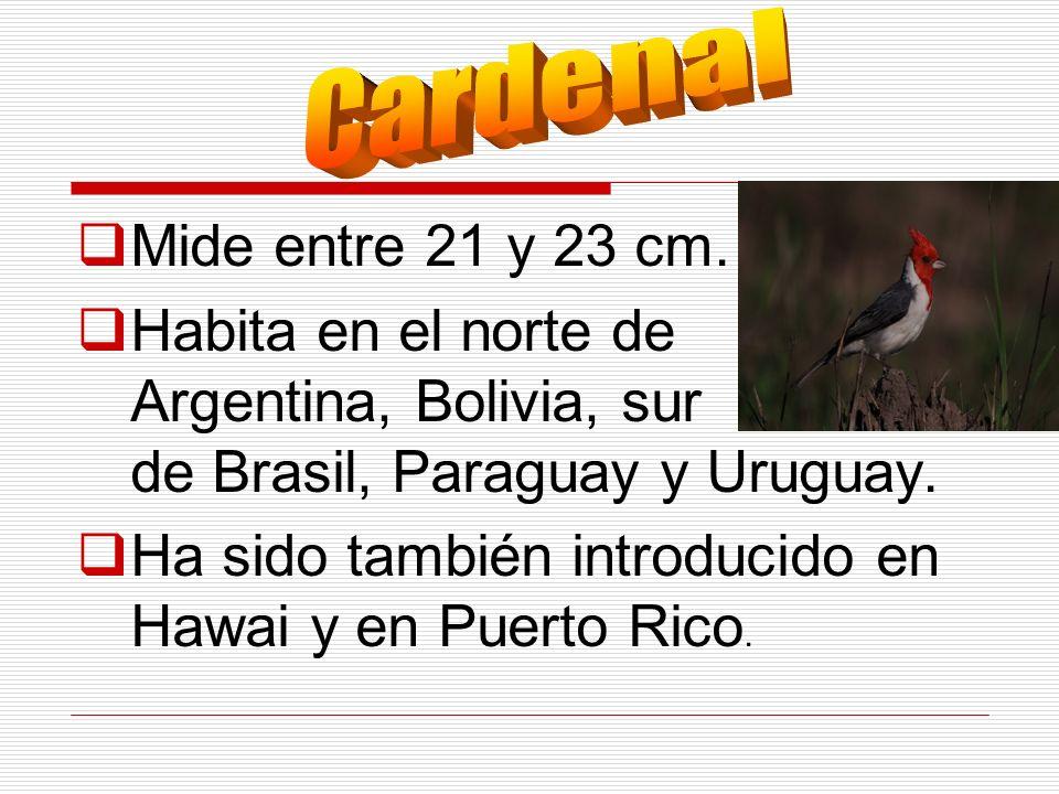Mide entre 21 y 23 cm. Habita en el norte de Argentina, Bolivia, sur de Brasil, Paraguay y Uruguay. Ha sido también introducido en Hawai y en Puerto R