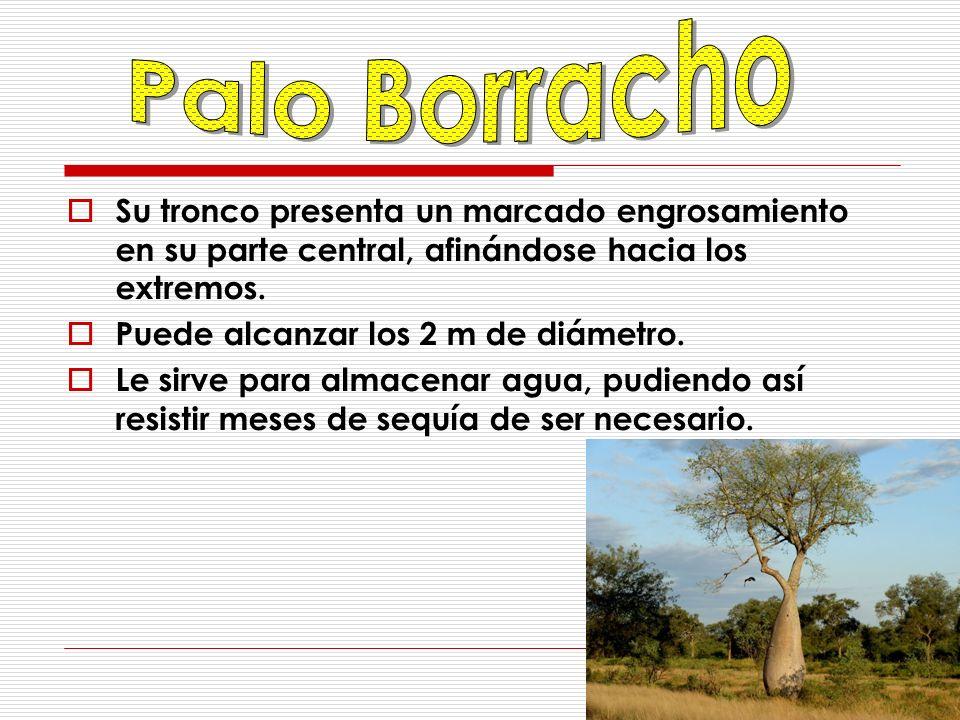 Mide entre 21 y 23 cm.Habita en el norte de Argentina, Bolivia, sur de Brasil, Paraguay y Uruguay.