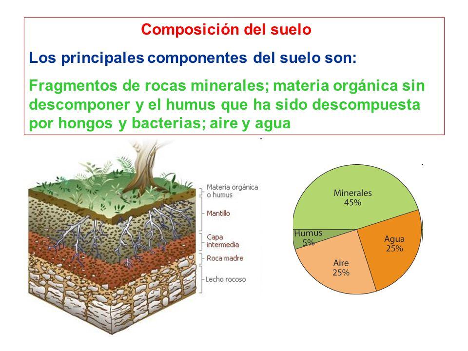 Composición del suelo Los principales componentes del suelo son: Fragmentos de rocas minerales; materia orgánica sin descomponer y el humus que ha sid