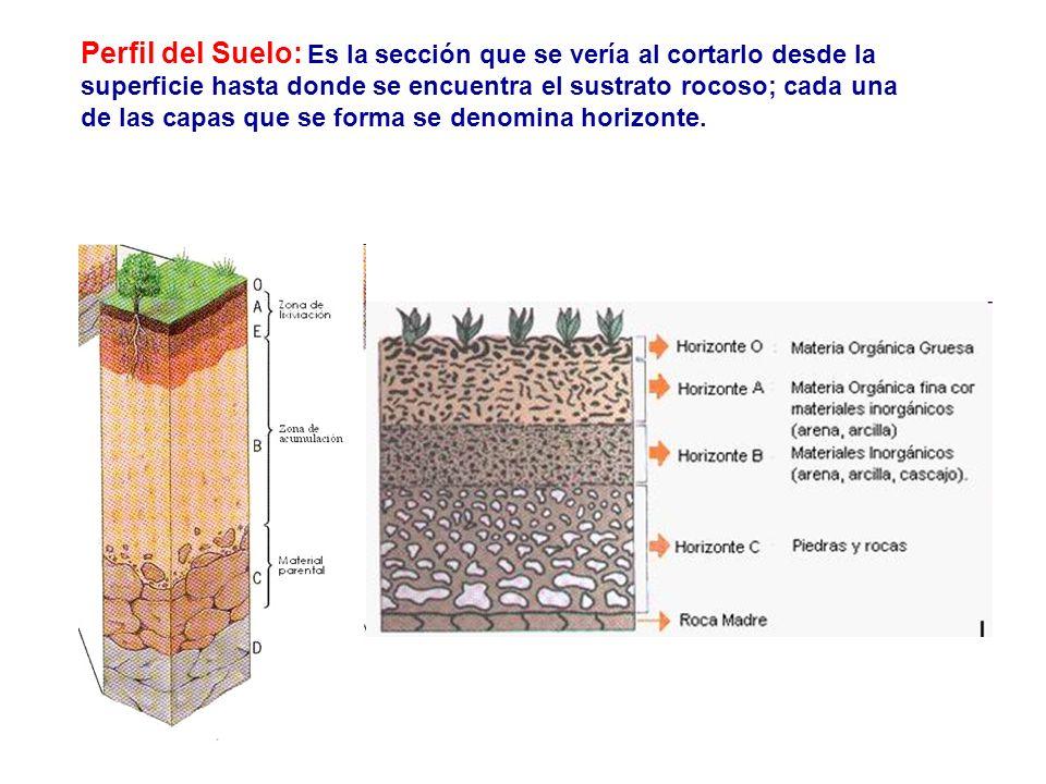 Perfil del Suelo: Es la sección que se vería al cortarlo desde la superficie hasta donde se encuentra el sustrato rocoso; cada una de las capas que se