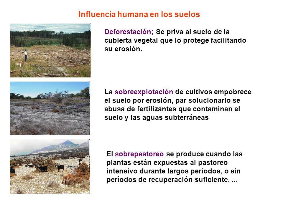 Influencia humana en los suelos El sobrepastoreo se produce cuando las plantas están expuestas al pastoreo intensivo durante largos períodos, o sin pe