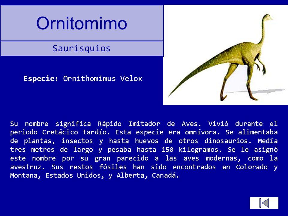 Ornitomimo Su nombre significa Rápido Imitador de Aves. Vivió durante el periodo Cretácico tardío. Esta especie era omnívora. Se alimentaba de plantas
