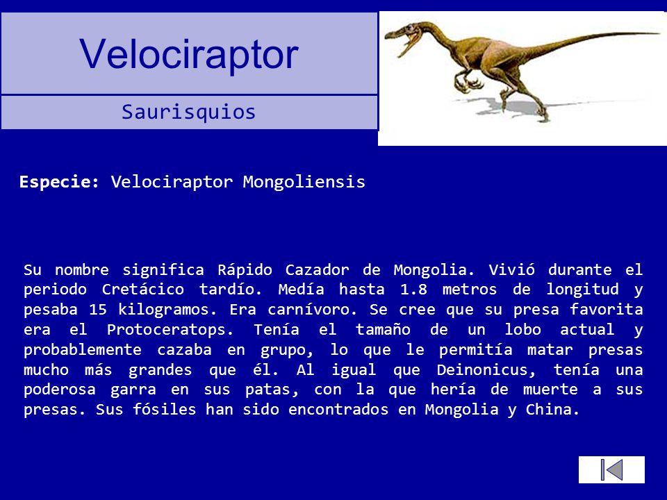Velociraptor Su nombre significa Rápido Cazador de Mongolia. Vivió durante el periodo Cretácico tardío. Medía hasta 1.8 metros de longitud y pesaba 15
