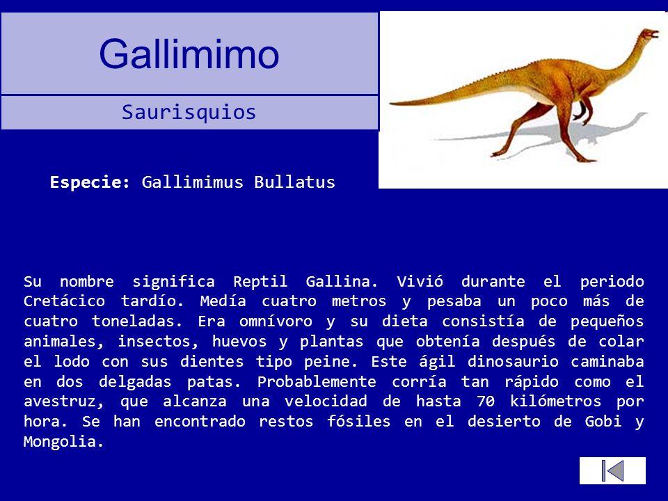 Gallimimo Su nombre significa Reptil Gallina. Vivió durante el periodo Cretácico tardío. Medía cuatro metros y pesaba un poco más de cuatro toneladas.