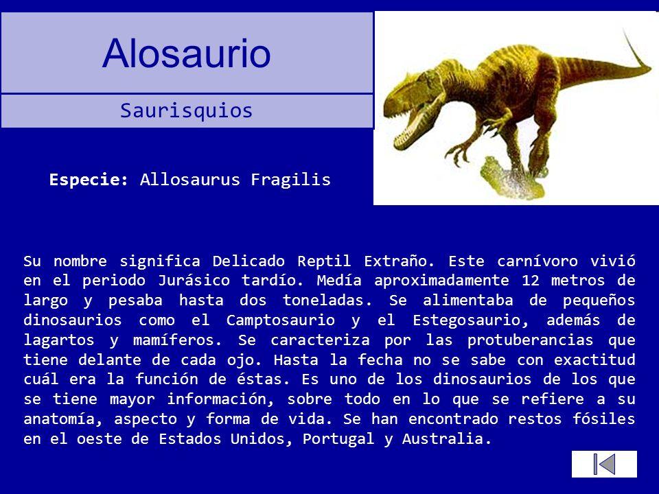 Alosaurio Su nombre significa Delicado Reptil Extraño. Este carnívoro vivió en el periodo Jurásico tardío. Medía aproximadamente 12 metros de largo y