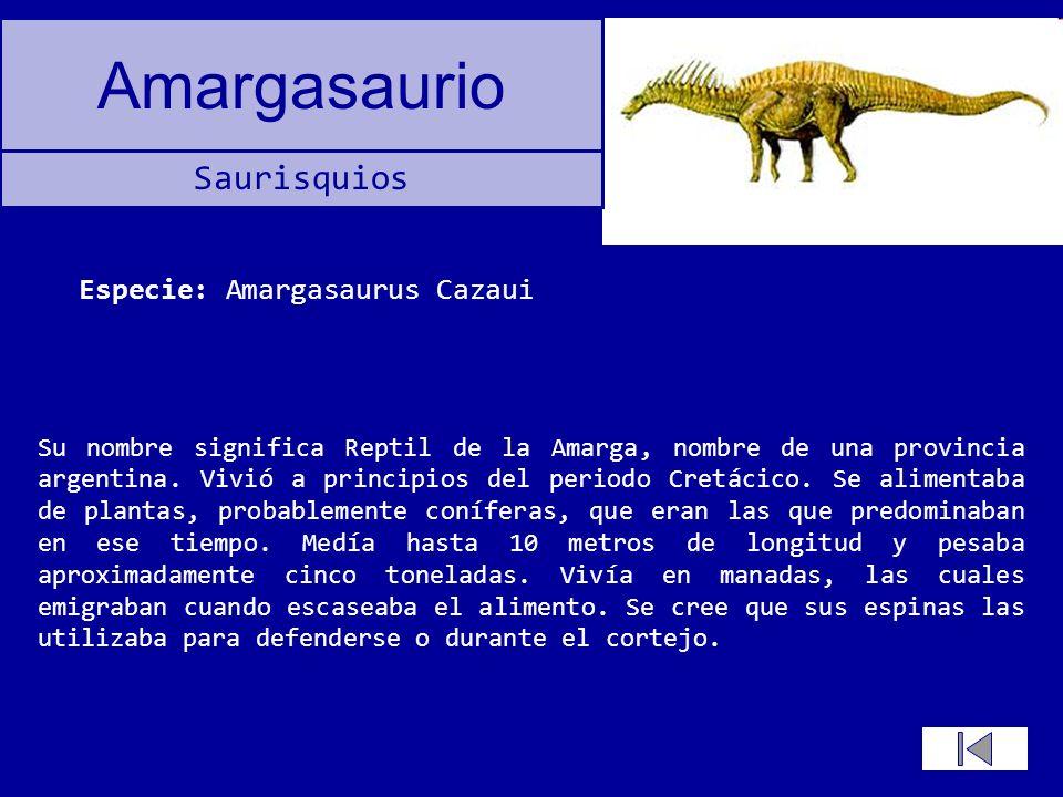 Amargasaurio Su nombre significa Reptil de la Amarga, nombre de una provincia argentina. Vivió a principios del periodo Cretácico. Se alimentaba de pl