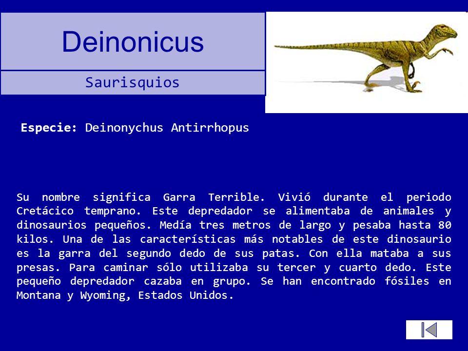 Deinonicus Su nombre significa Garra Terrible. Vivió durante el periodo Cretácico temprano. Este depredador se alimentaba de animales y dinosaurios pe