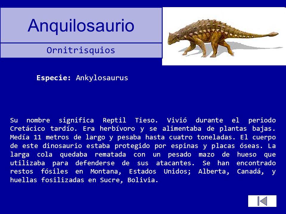 Anquilosaurio Su nombre significa Reptil Tieso. Vivió durante el periodo Cretácico tardío. Era herbívoro y se alimentaba de plantas bajas. Medía 11 me