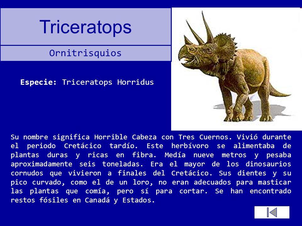 Triceratops Su nombre significa Horrible Cabeza con Tres Cuernos. Vivió durante el periodo Cretácico tardío. Este herbívoro se alimentaba de plantas d