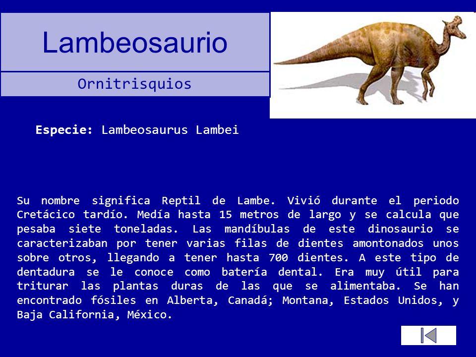 Lambeosaurio Su nombre significa Reptil de Lambe. Vivió durante el periodo Cretácico tardío. Medía hasta 15 metros de largo y se calcula que pesaba si