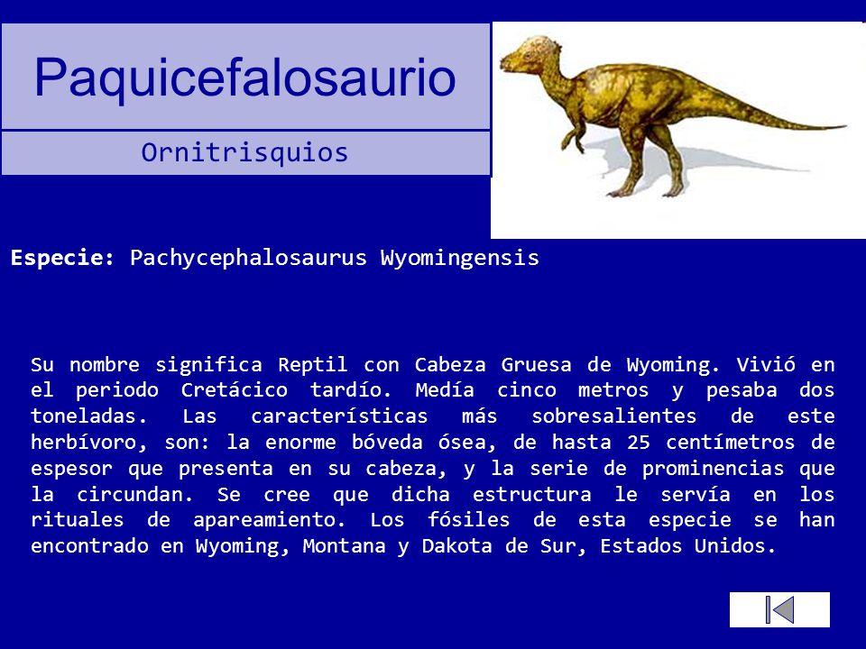 Paquicefalosaurio Su nombre significa Reptil con Cabeza Gruesa de Wyoming. Vivió en el periodo Cretácico tardío. Medía cinco metros y pesaba dos tonel