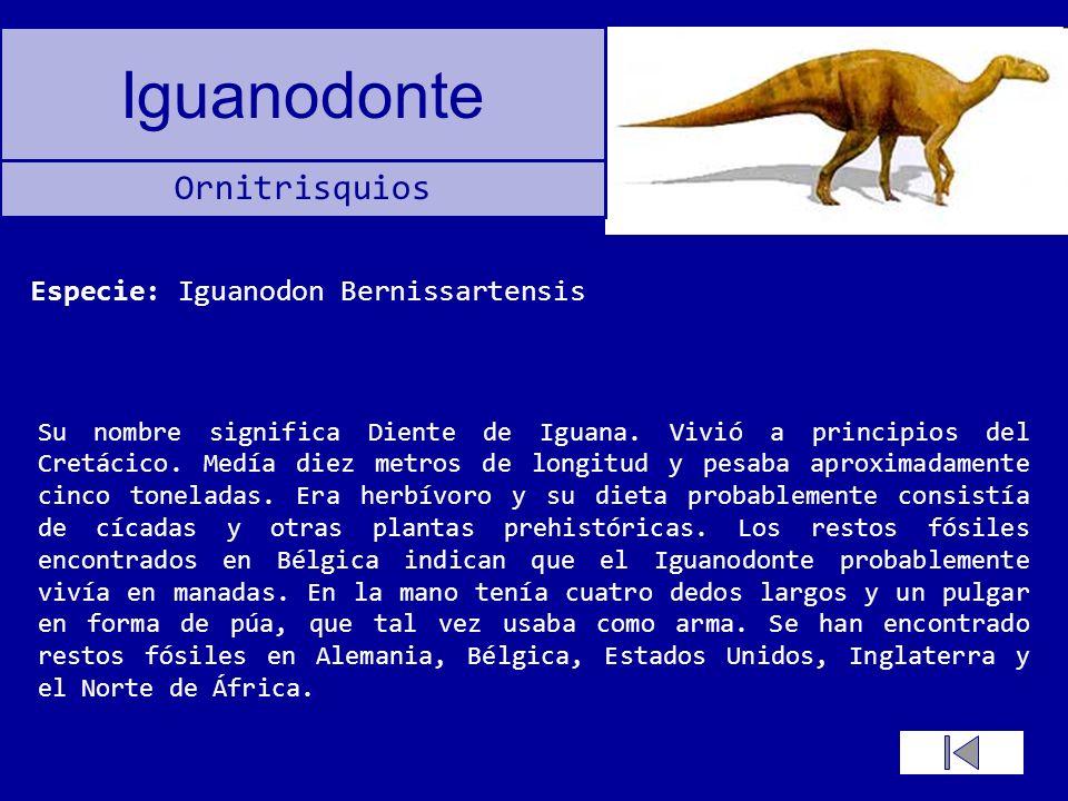 Iguanodonte Su nombre significa Diente de Iguana. Vivió a principios del Cretácico. Medía diez metros de longitud y pesaba aproximadamente cinco tonel