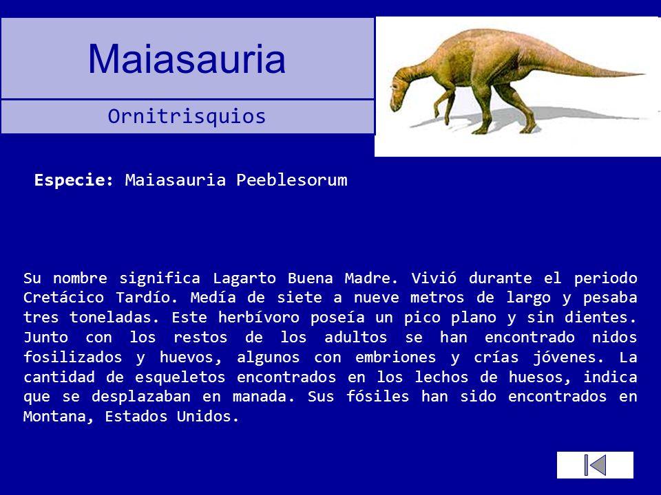 Maiasauria Su nombre significa Lagarto Buena Madre. Vivió durante el periodo Cretácico Tardío. Medía de siete a nueve metros de largo y pesaba tres to