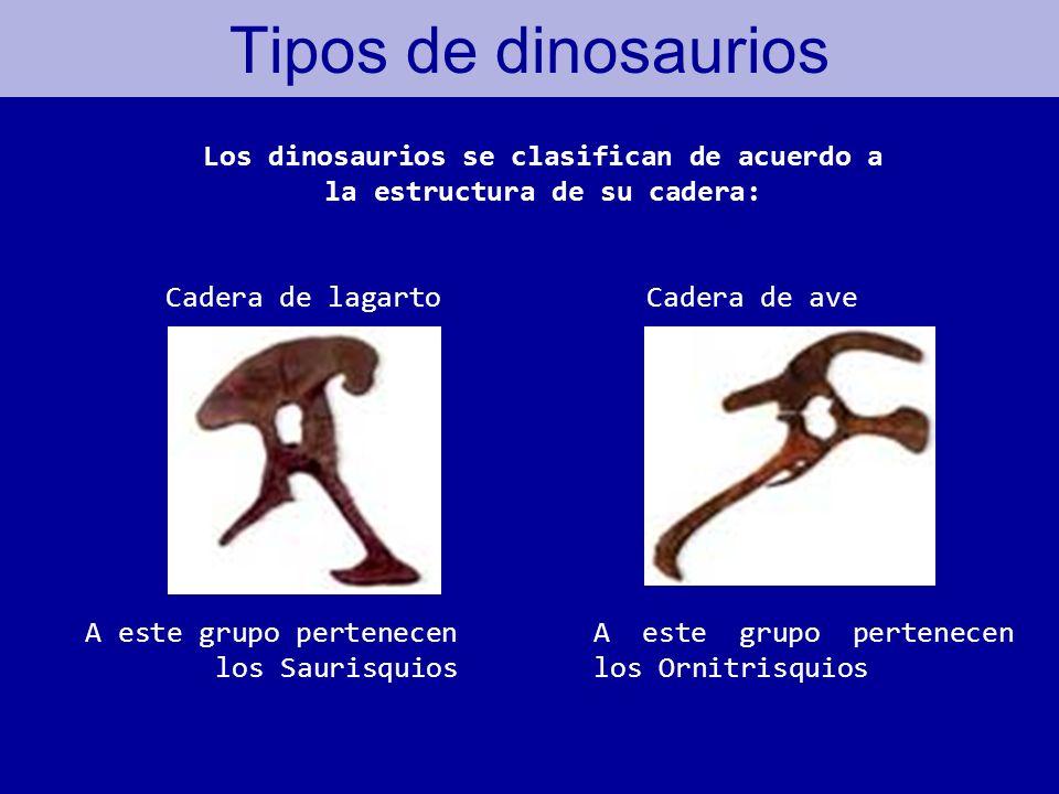 Los dinosaurios se clasifican de acuerdo a la estructura de su cadera: Tipos de dinosaurios Cadera de lagartoCadera de ave A este grupo pertenecen los