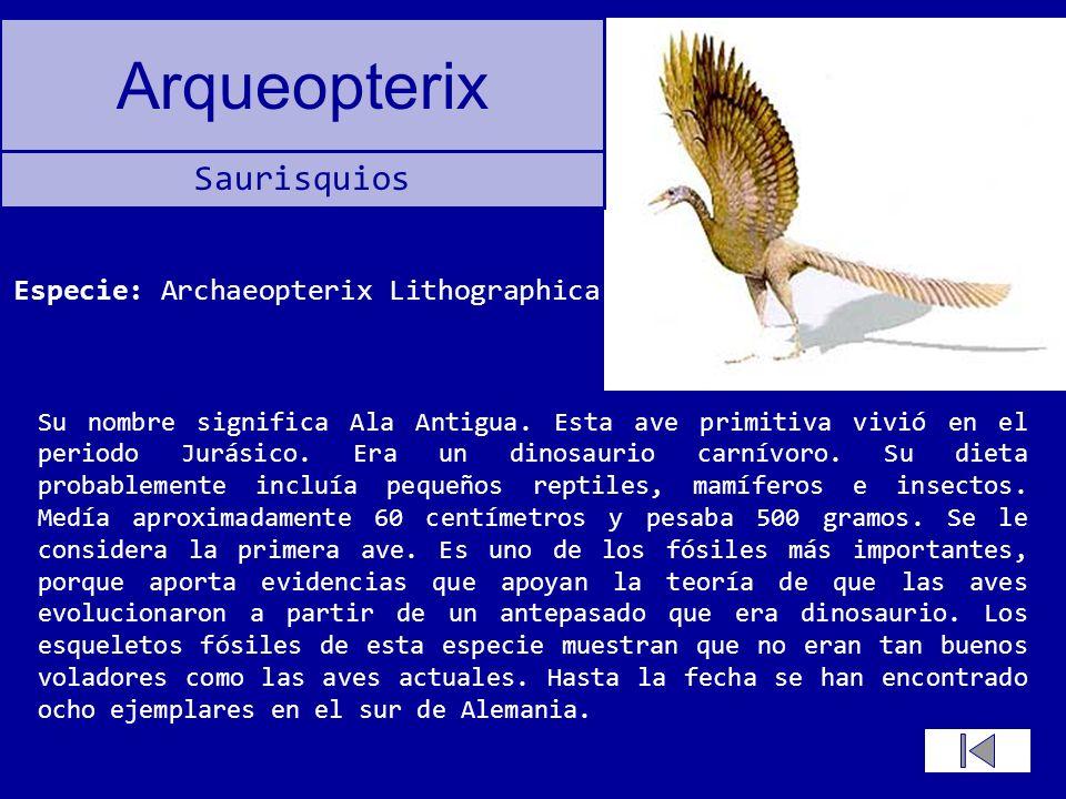 Arqueopterix Su nombre significa Ala Antigua. Esta ave primitiva vivió en el periodo Jurásico. Era un dinosaurio carnívoro. Su dieta probablemente inc