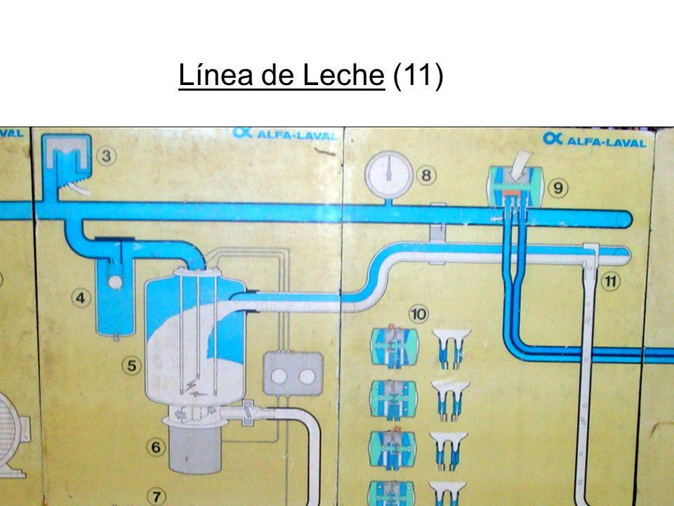 Línea de Leche (11)
