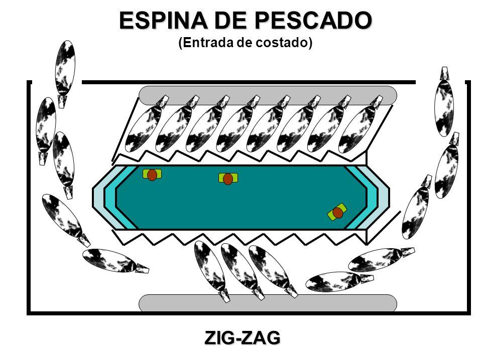 ESPINA DE PESCADO (Entrada en dirección a la sala de ordeñe) Caño de cola recto